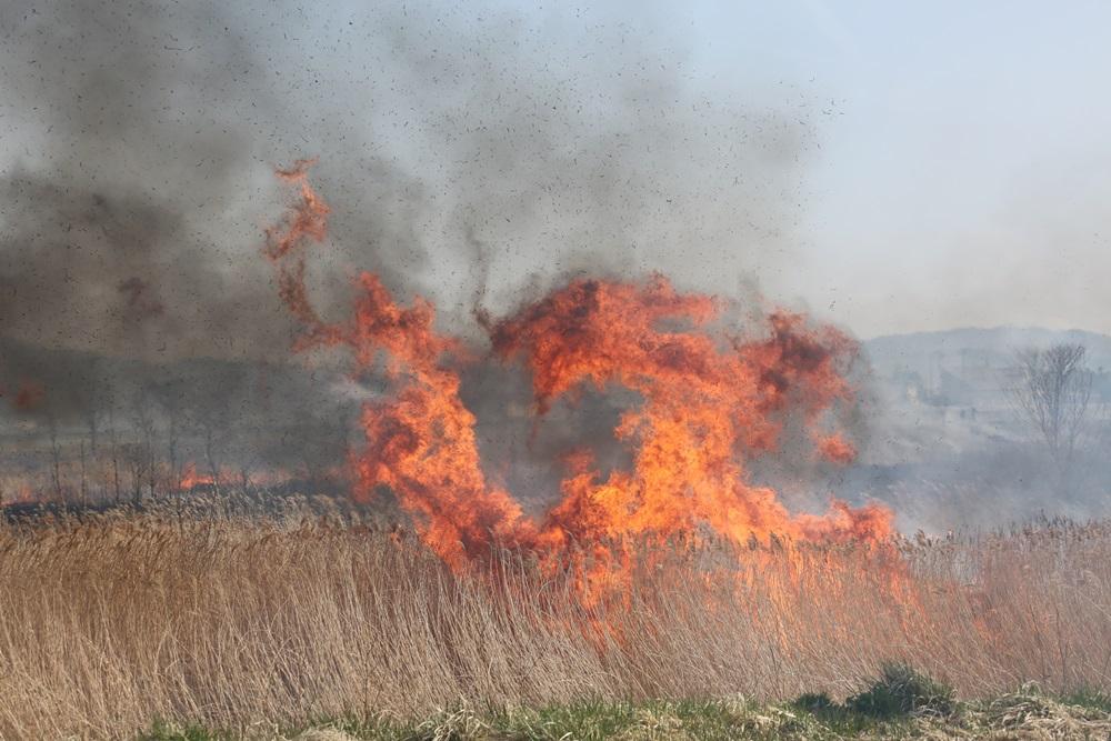 河川の野焼きに_c0111229_1901316.jpg