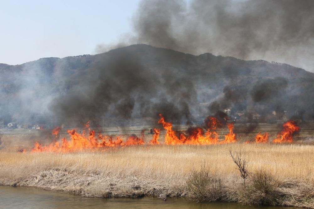 河川の野焼きに_c0111229_1904411.jpg
