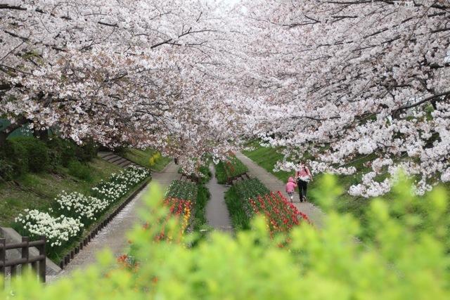【江川せせらぎ緑道】part 2_f0348831_15140620.jpg