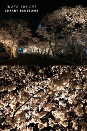 夜桜_b0345658_01193589.jpg