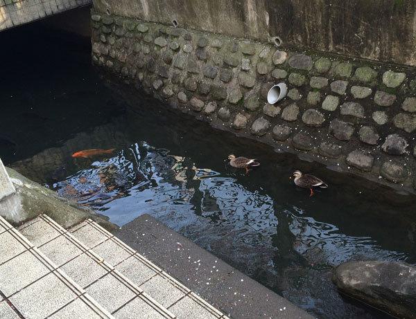 お魚ウォッチング大好き!!_c0110361_15345678.jpg