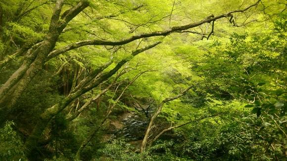 2015年 新緑の季節 箕面_d0202264_15101667.jpg