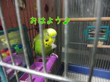 f0196665_13173019.jpg