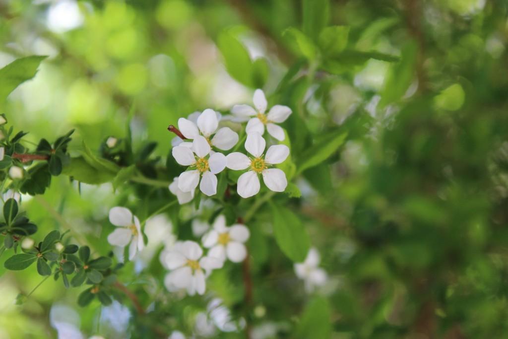 春の花_c0310571_21242196.jpg