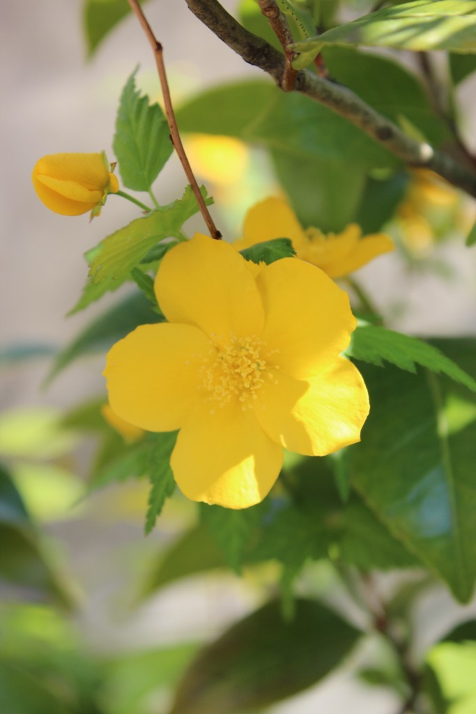 春の花_c0310571_21260551.jpg