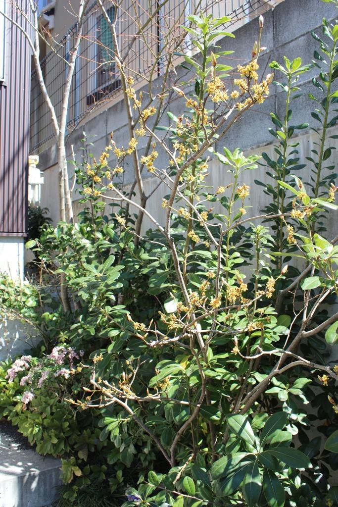春の花_c0310571_21270075.jpg