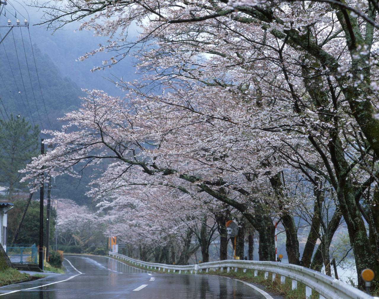 hama-take の blog        nikkitake.exblog.jp