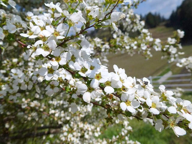 春はる~♫_c0165589_938331.jpg