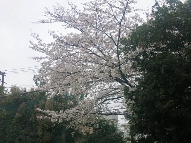 雨の入学式_a0000912_23511369.jpg