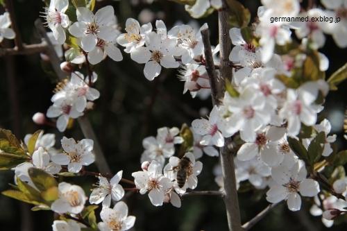 春うらら_d0144726_6563372.jpg