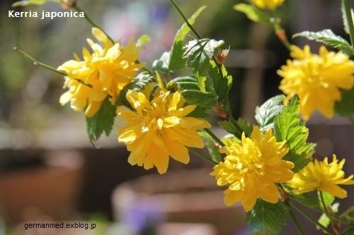 春うらら_d0144726_7102754.jpg