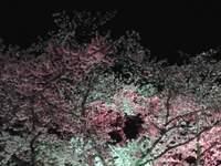 f0131936_0362756.jpg
