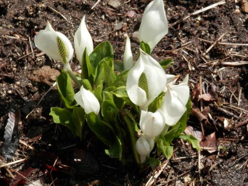春のおとずれ_f0296936_21124518.jpg
