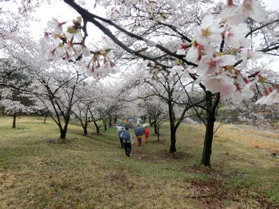 「花の雨」・・・我が町シリーズ白州(白須)_f0019247_2255139.jpg