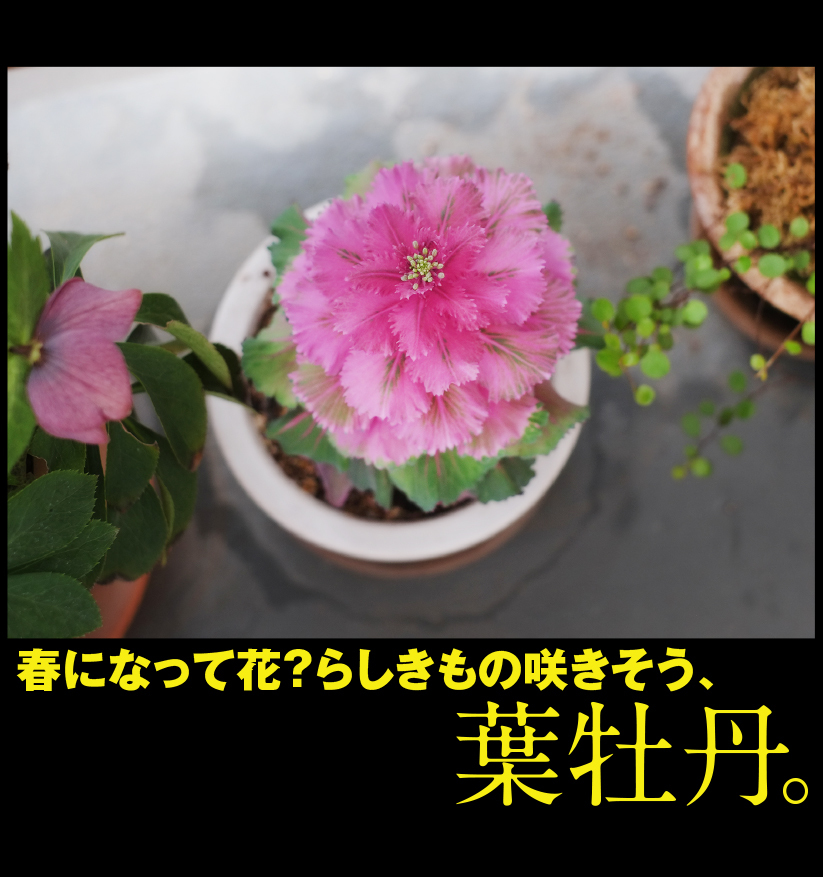 c0354952_21262526.jpg