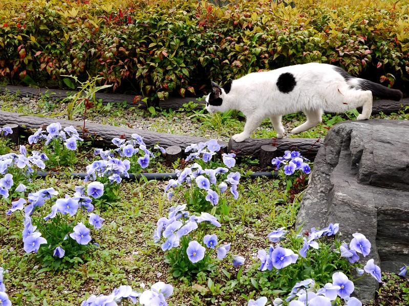 和歌山城公園にて_b0093754_182112.jpg