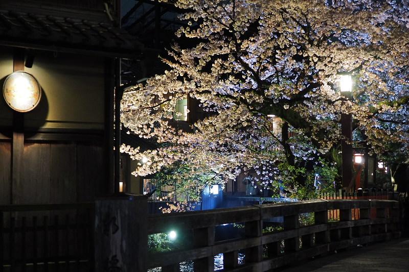 桜  2015 <祇園白川>                         _f0021869_22513476.jpg