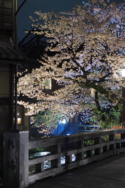 桜  2015 <祇園白川>                         _f0021869_2253514.jpg