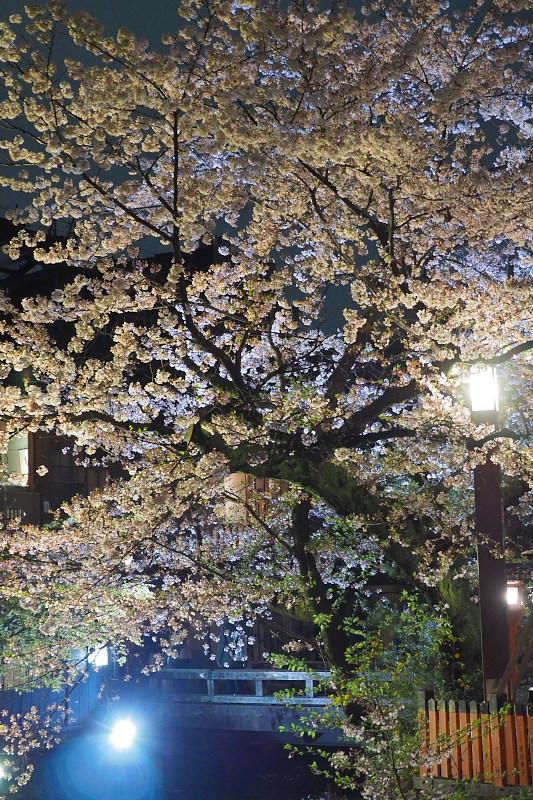 桜  2015 <祇園白川>                         _f0021869_2254299.jpg