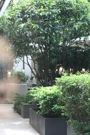 Paris 私のお気に入り ~ホテル サロン・ド・テ編~ 「マンダリン オリエンタルホテル パリ」_c0138180_19195941.jpg