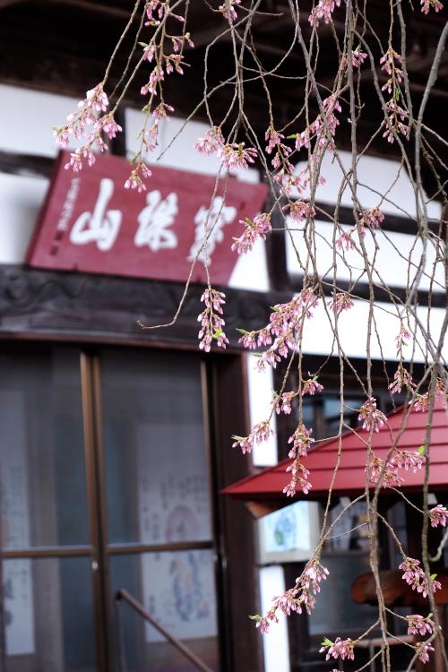 慈徳寺の種まき桜 福島市佐原 2015・04・11_e0143883_19314858.jpg