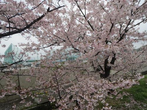「お花見」行かせて頂きました。_a0158095_925772.jpg