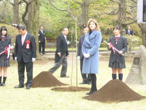 ハナミズキが日本に来て100年が経ちました。_b0172896_15371495.jpg