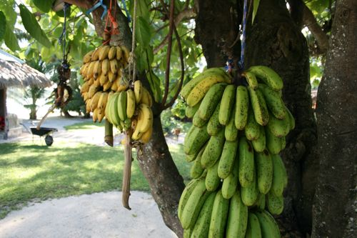 旅日記 クック諸島 2012MAY その11  Aitutaki Pics_f0059796_14382821.jpg