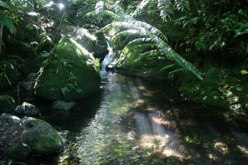 旅日記 クック諸島 2012MAY その16 Paさんのトレッキング_f0059796_1714740.jpg