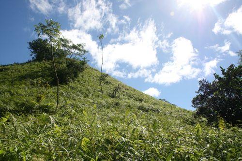 旅日記 クック諸島 2012MAY その16 Paさんのトレッキング_f0059796_17165690.jpg