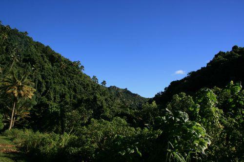 旅日記 クック諸島 2012MAY その16 Paさんのトレッキング_f0059796_1775857.jpg