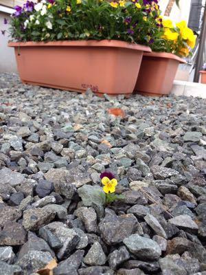 ちいさなお花。_b0135325_173296.jpg