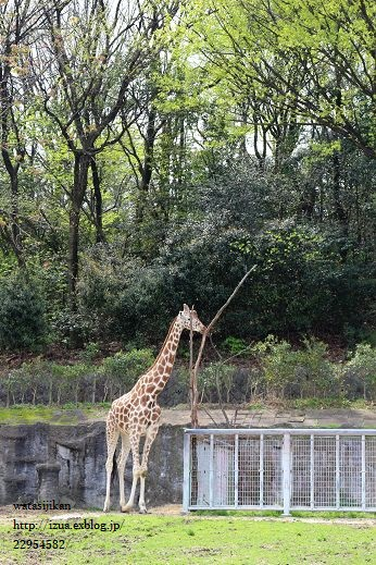 動物園へ行く_e0214646_21322895.jpg