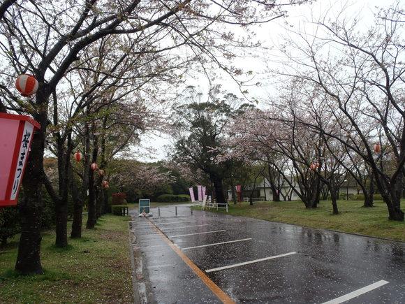 ●4月14日(火)かみす桜まつり会場開花状況●_f0229750_9184141.jpg