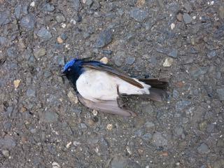 幸せの青い鳥。_e0149587_13514692.jpg