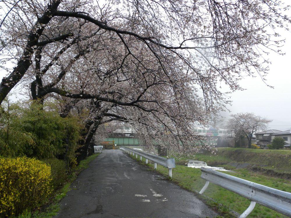 冬ナクバ春ナキニ_b0329588_16243946.jpg