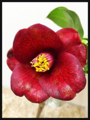 お花は心のビタミン剤_c0227612_12132532.jpg