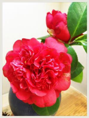 お花は心のビタミン剤_c0227612_12132633.jpg