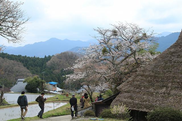 三多気桜まつり散策 (その3)_e0321325_1257354.jpg