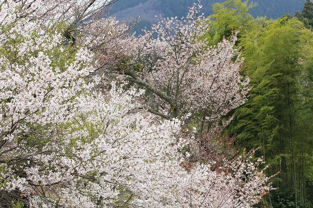 三多気桜まつり散策 (その3)_e0321325_1324516.jpg