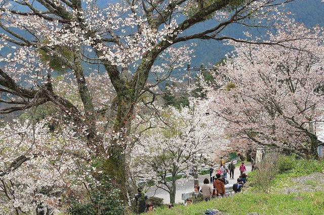 三多気桜まつり散策 (その3)_e0321325_132938.jpg