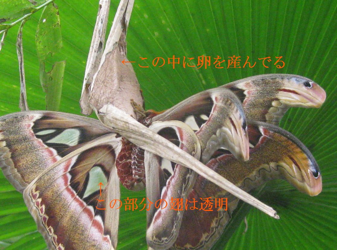 f0191927_1115146.jpg