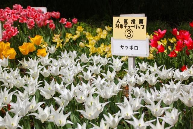 【横浜公園】part 1_f0348831_07402460.jpg