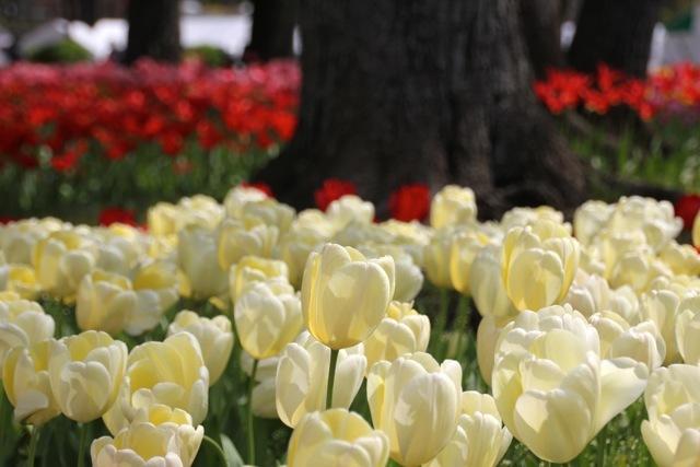 【横浜公園】part 1_f0348831_07404121.jpg