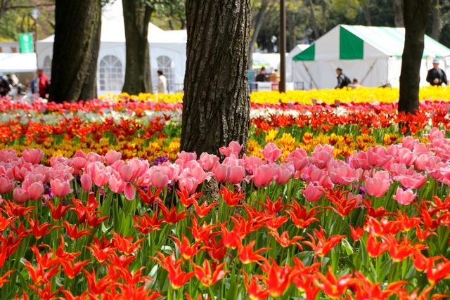 【横浜公園】part 1_f0348831_07404663.jpg