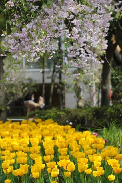 【横浜公園】part 1_f0348831_07574630.jpg