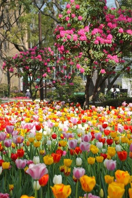 【横浜公園】part 1_f0348831_07575109.jpg