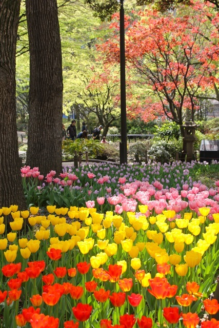【横浜公園】part 2_f0348831_22474884.jpg