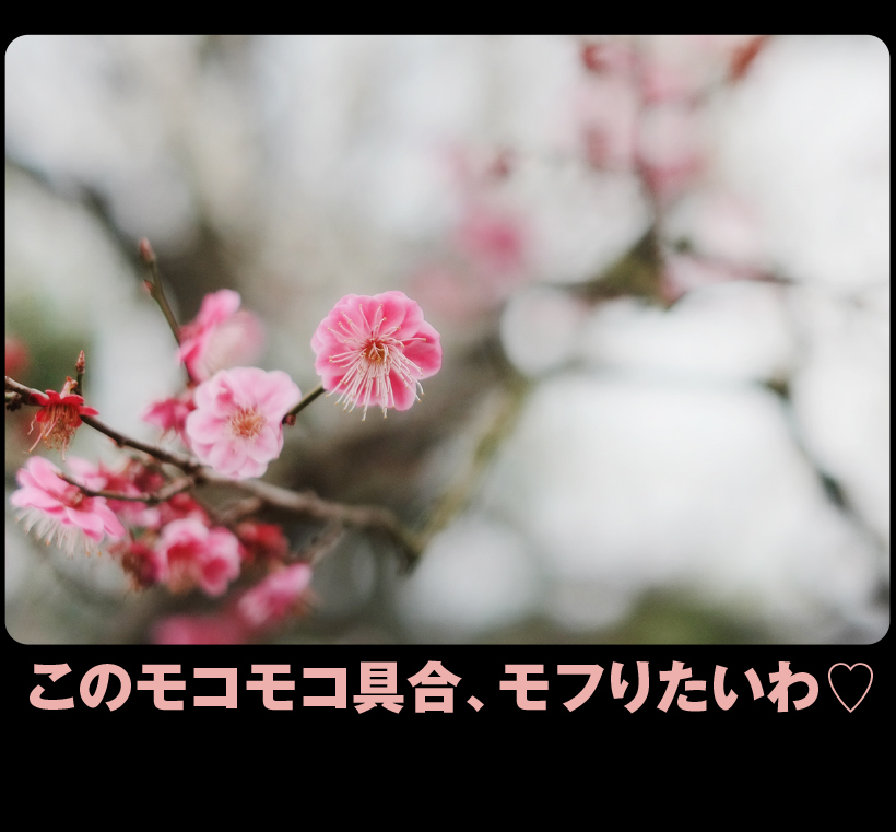 c0354952_21320540.jpg