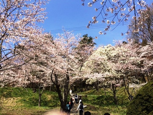 花見 ~in二本松~_e0211357_9571081.jpg